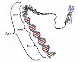 Resultado de imagen de proyecto 1000 genomas wikipedia