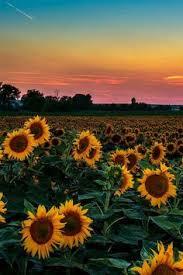 335 Best Pretty Stuff images in 2019   Planting <b>flowers</b>, Beautiful ...