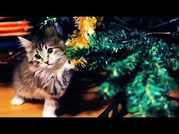 <b>Christmas cats</b> compilation - YouTube