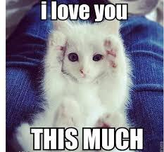 Cute memes on Pinterest | Cute Animal Memes, Leopard Geckos and ... via Relatably.com