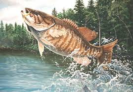 Image result for smallmouth bass pictures