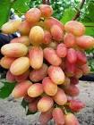 Вкуснейшие сорта столового винограда
