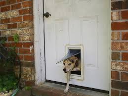 Двери для животных — Википедия