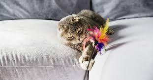 <b>Игрушки</b> для котов и котят: обычные, интерактивные ...