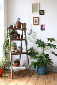 house plants succulents cactus and indoor gardens potted plants and botanical design for amazing office plants