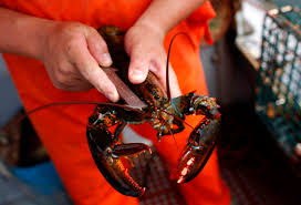 Red Lobster Lincoln Ne How A Class In Lobstering Helped Turn Around This Maine High