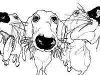 Dachshund: лучшие изображения (174) в 2020 г. | Такса, Собаки ...