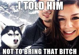 Best Of The Jealous / Pissed Off Husky Meme | WeKnowMemes via Relatably.com