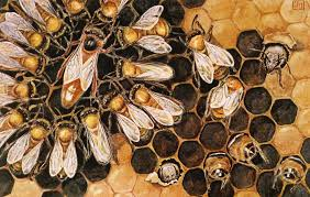 Image result for queen bee among bees