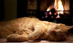 5 Most Dangerous <b>Cat</b> Diseases   <b>Animal Planet</b>