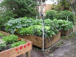 Small Picture Contemporary Florida Gardening Vegetable In And Ideas