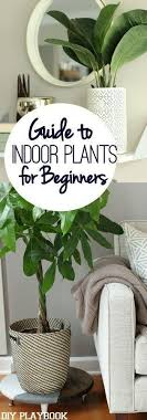 roomindoor plants decoration room bedroom dont have a green thumb but want to add some low maintenance plants pl