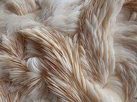 31 лучших изображений доски «Home. Closet. Fabrics» | Фильм ...
