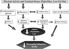 Intense Exercise Has Unique Effects on Both Insulin Release and     Diabetes Spectrum