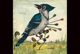 slings and arrows why birders love to hate blue jays audubon photo jason holley