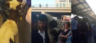 Image result for metrobüs kurbanı koç yenibosna