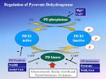 pyruvate dehydrogenase (lipoamide)-phosphatase