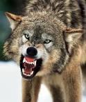 ferociously