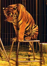 Imagini pentru la circ