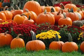 Image result for image of pumpkins