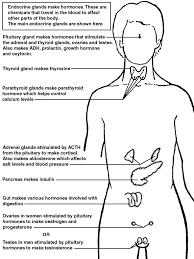 endocrine glands   diagram   patienti   l jpg