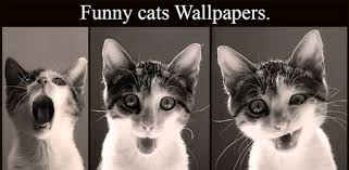 <b>Funny cats</b> Wallpapers - Apps on Google Play