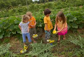 Image result for farm to table for kids