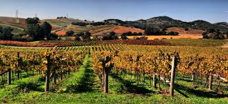 Image result for napa valley morning good mornings