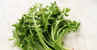 Wild Lettuce (Lactuca virosa): Pain Relief, Benefits and Risks