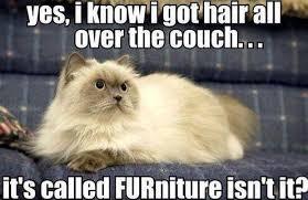 Cat Meme FURniture via Relatably.com