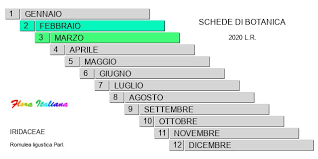 Romulea ligustica [Zafferanetto ligure] - Flora Italiana