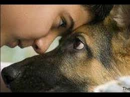 essay on loyalty of dogs   essay babies and dogs top  you asian
