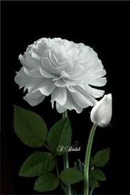 132 Best <b>Lovely Flowers</b> images   Flowers, Beautiful flowers ...