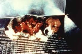 RV 8 sept. contre l'élevage de chien de laboratiore  Images?q=tbn:ANd9GcS1SCJ5vSd_rwe6b69aT7l7CbNPieqGhmaxBKwigqTpM1ap1U_C3g