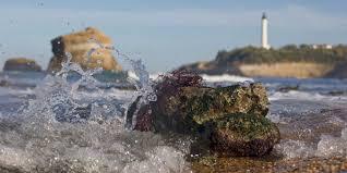 seaweed alga