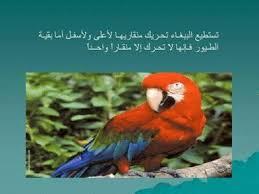 معلومات عن حيوانات images?q=tbn:ANd9GcS
