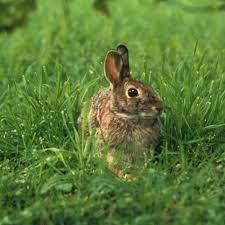 Resultat d'imatges de informacio sobre els conills per a nins