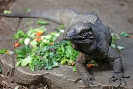 Reptiles: <b>The Beautiful and</b> the Deadly | Museum of the Rockies
