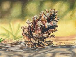 Image result for student color pencil drawing