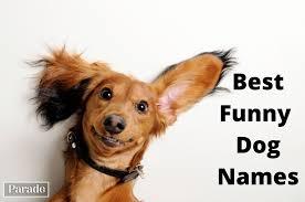 150 <b>Funny Dog</b> Names Guaranteed to Get a Laugh