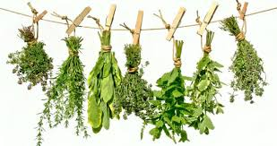 Image result for herb