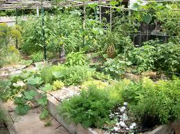 Kitchen Herb Garden Design Garden Herbs 17 Best Images About Herb Gardens On Pinterest