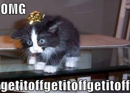 Present Cat - Funny Images and Memes To Fill You Up With Geeky ... via Relatably.com