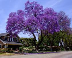 Image result for empress trees