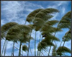 Image result for image of the wind blowing