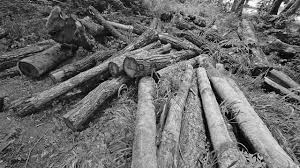 deforestation speech in english  deforestation essays