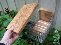 Build Your Own Mason Bee House   Boing Boingemerging in tube mason bee house top off
