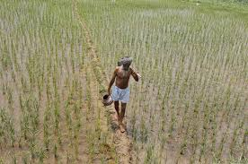 essay on problems faced by farmers in  essay on problems faced by farmers in