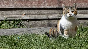 Elderly <b>cat</b> returns home after seven years in the wilderness | Stuff ...