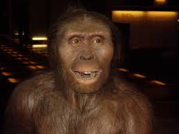 creation ministries international god of evolution google has a cool doodle out today commemorating the discovery of lucy the partial specimen of australopithecus afarensis found by the american